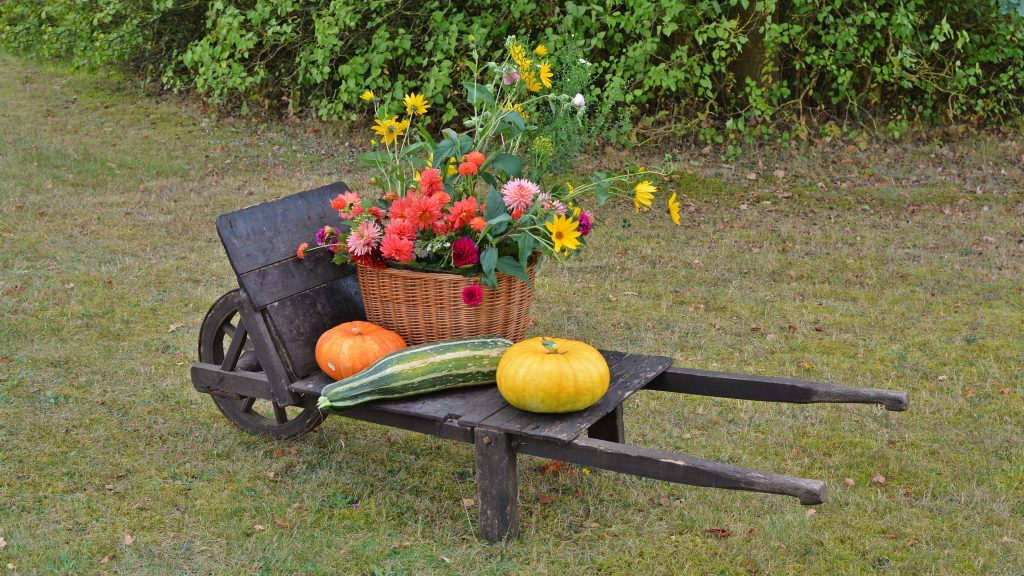 thanksgiving, decoration, harvest festival